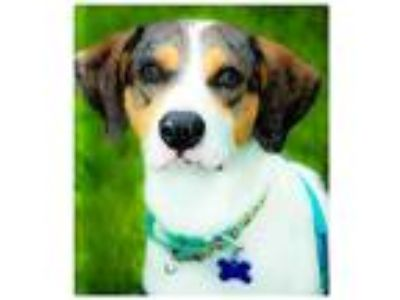 Adopt TUCKER a White Catahoula Leopard Dog / Mixed dog in Brewster