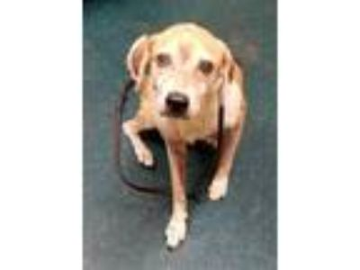 Adopt Kyle a Beagle / Mixed dog in Oceanside, CA (25921253)