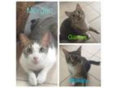 Adopt Morgan, Gaines, Blakely a Tabby