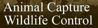 Animal Capture Wildlife Control
