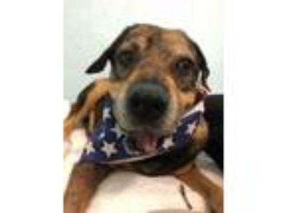 Adopt Byrd a Shar-Pei, Beagle