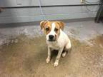 Adopt Janie a White Retriever (Unknown Type) / Mixed dog in Greenville