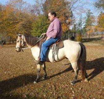 Quality Quarter Gelding Horse for Sale