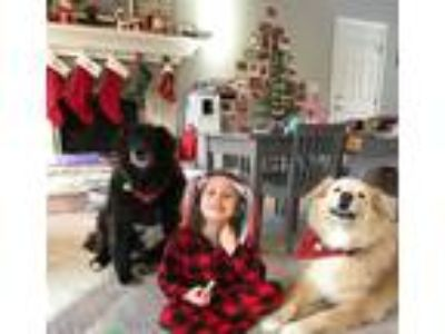 Adopt Abby & Lily -OWNER DIED a White - with Tan, Yellow or Fawn Great Pyrenees