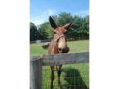 Adopt Fred (Weasley) a Mule