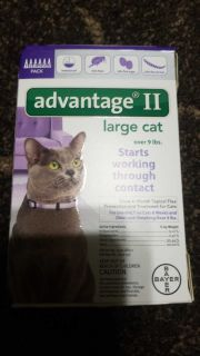 Advantage II large cats