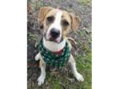 Adopt Cutty a Mixed Breed