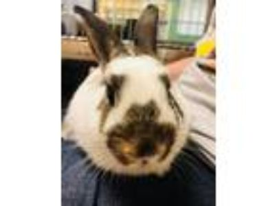 Adopt Cookie a Bunny Rabbit