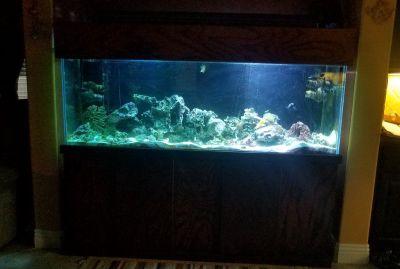 180 gal. saltwater aquarium