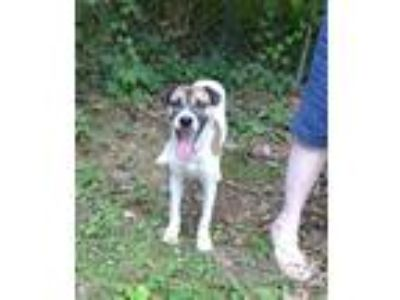 Adopt Lucy a Tricolor (Tan/Brown & Black & White) Feist / Rat Terrier / Mixed