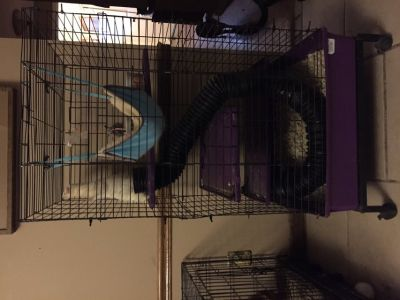 Ferret and cage