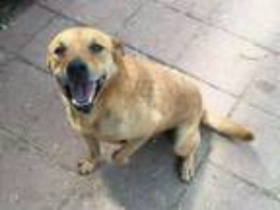 Adopt Rusty a Mixed Breed