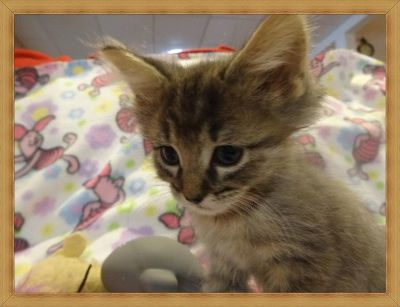 TLC rescue has several kittens and cats for adoption.