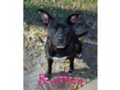 Adopt Ruffles (In Foster Home - Please call [phone removed] to make appt to...
