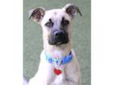 Adopt Moose a Black Mouth Cur / Mixed dog in Novato, CA (25365095)