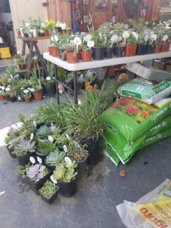 Succulents and plants below retail Open Sundays too from 9am to 5:30pm