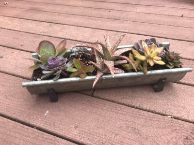 Succulent planter - cute for a table