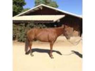 Fun trail horse for sale