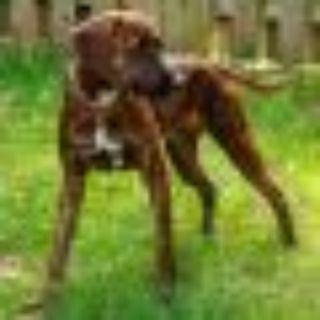 Annie Plott Hound Dog