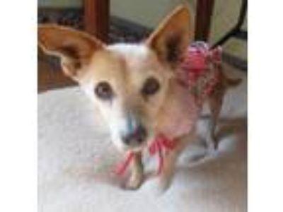 Adopt Rescue a Dachshund, Terrier
