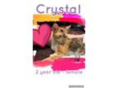 Adopt Crystal a Calico