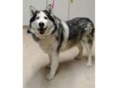 Craigslist Animals And Pets For Sale Or Adoption