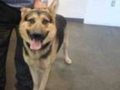 Adopt REX a German Shepherd Dog
