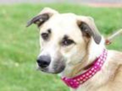 Adopt Addie a Tan/Yellow/Fawn Mixed Breed (Large) / Mixed dog in Georgetown