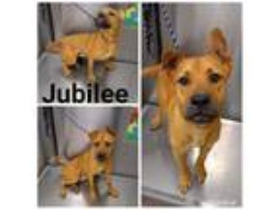 Adopt JUBILEE a Brown/Chocolate Mixed Breed (Medium) / Mixed dog in Macon