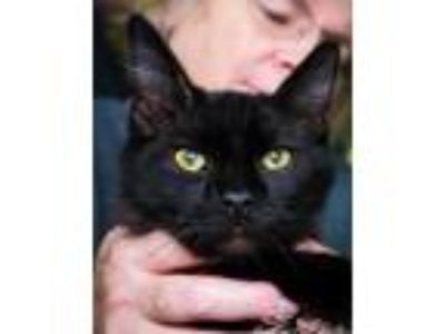 Adopt Blackberry Jam a Domestic Medium Hair