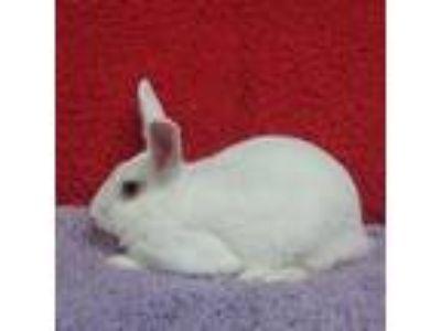 Adopt Sadie a Bunny Rabbit