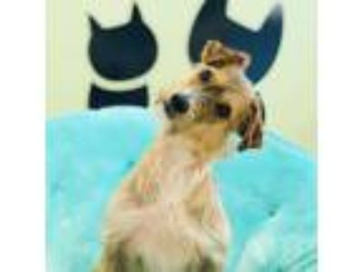 Adopt Kiwi a Terrier (Unknown Type, Small) dog in San Diego, CA (25328079)