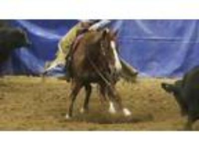Awesome Cow Horse UCHA earnings over 24000