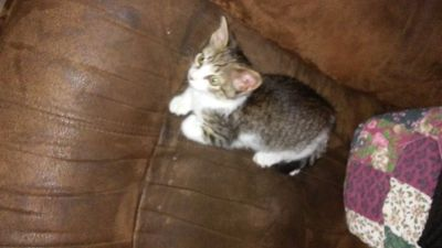 Rescued female kitten is now ready for furever home
