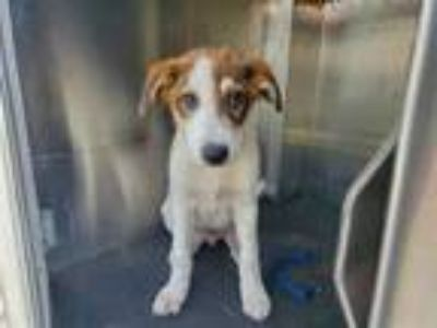 Adopt IMOGEN a Pointer, Mixed Breed