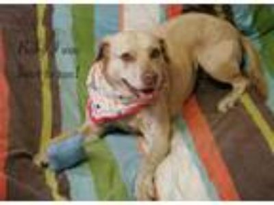 Adopt Taffy a Catahoula Leopard Dog, Carolina Dog