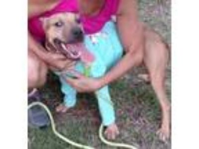 Adopt Ava Legend a Staffordshire Bull Terrier, Black Mouth Cur