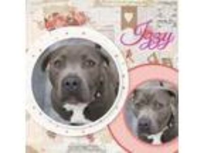 Adopt Izzy a Black Pit Bull Terrier / Mixed dog in Claremore, OK (25256390)