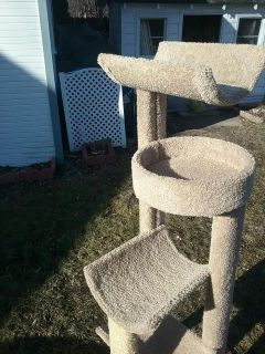 Large cat stand