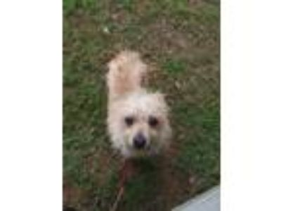 Adopt Jarvis a Tan/Yellow/Fawn Terrier (Unknown Type, Small) / Mixed dog in