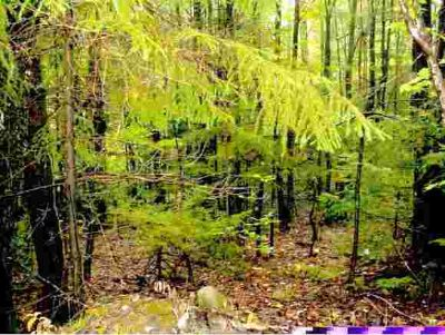 Pond Hill Road LOT 15 Lunenburg, (241) 10.4 ACRE wooded lot