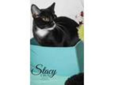Adopt Stacy a All Black Domestic Shorthair / Domestic Shorthair / Mixed cat in