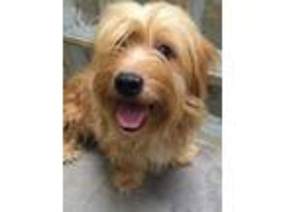 Adopt Ted-o a Cairn Terrier