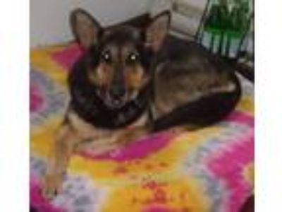 Adopt Princess and Queenie (AWESOME Dogs) a German Shepherd Dog