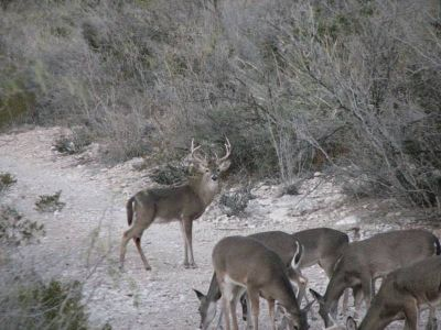 AVAILABLE HUNTING LEASE