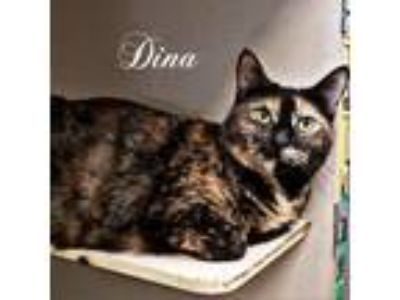 Adopt Dina a Tortoiseshell Domestic Shorthair cat in League City, TX (24105615)