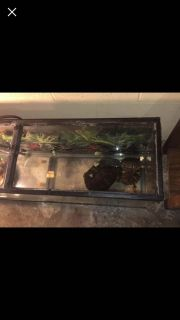75 gallons and 4 turtles
