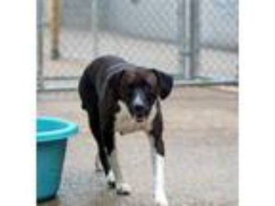 Adopt Monica a Black Mixed Breed (Large) / Mixed dog in Charleston