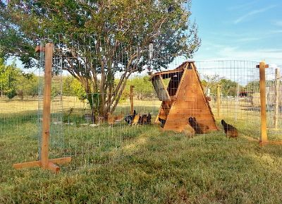 Portable Coop & Yard For Free Range Chickens or Ducks