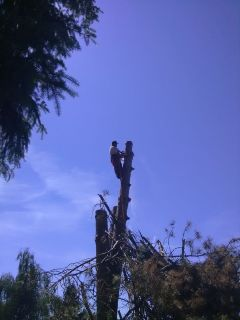Tree Removal and Limb Ups/ Licensed Bonded and Insured